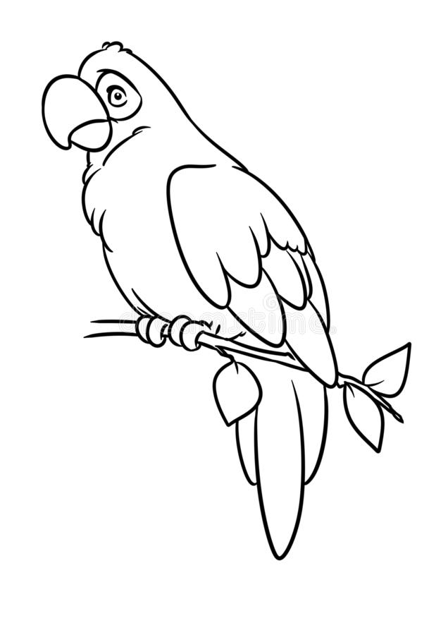 Parrot macaw bird animal character cartoon illustration coloring page stock illustration