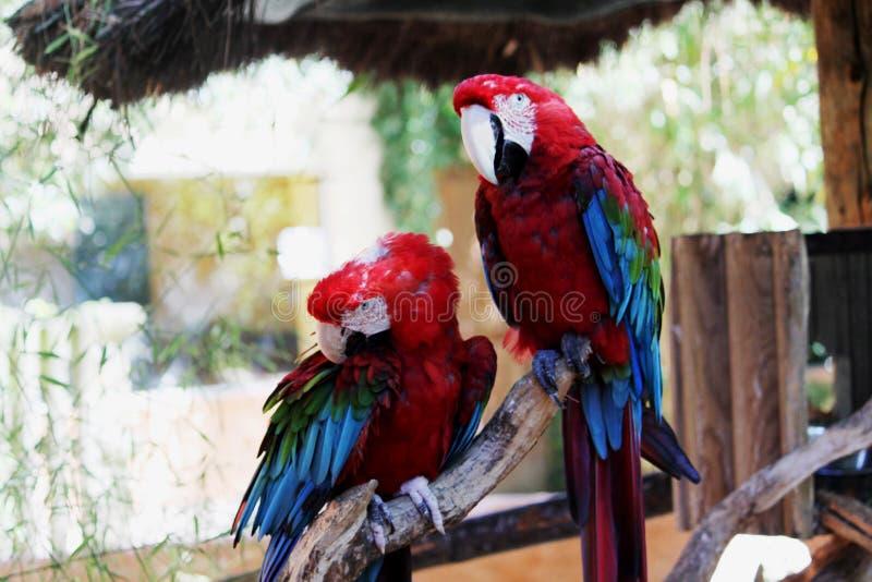 Parrot, Macaw, Bird, Beak royalty free stock photos