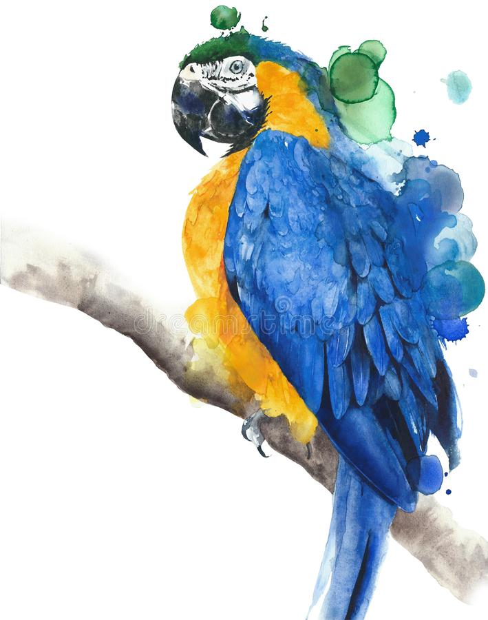 Parrot macaw blue and yellow colors watercolor painting illustration isolated on white background stock illustration