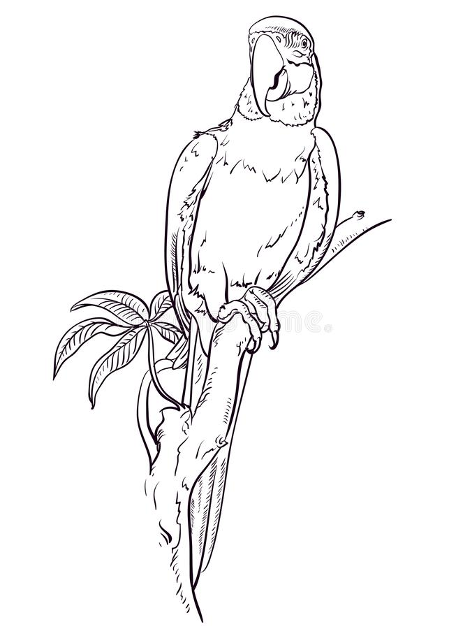 Parrot macaw sits on the branch stock illustration