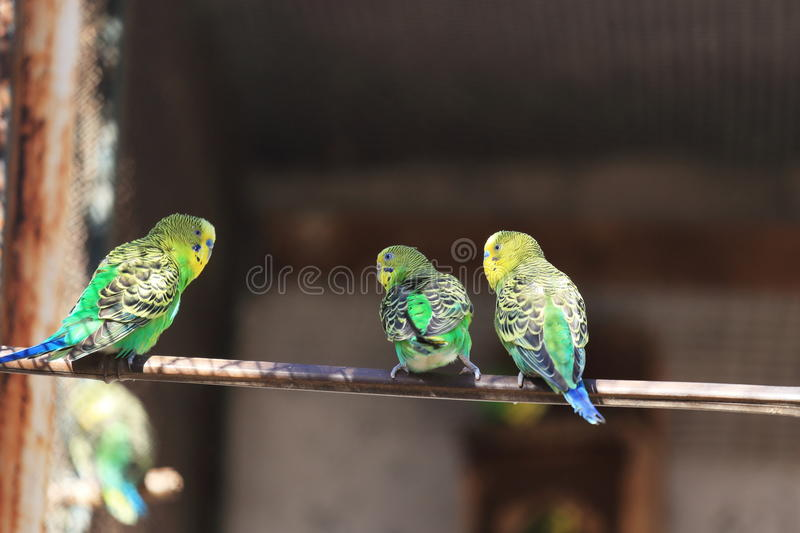 Download Parrot macaw stock image. Image of life, wing, beautiful - 35217859
