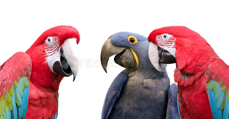 Parrot meeting royalty free stock photo