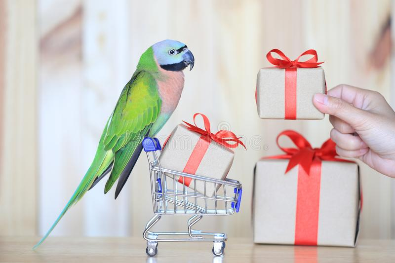 Parrot on model miniature shopping cart and colorful gift box for christmas and happy new year on wooder background stock photos