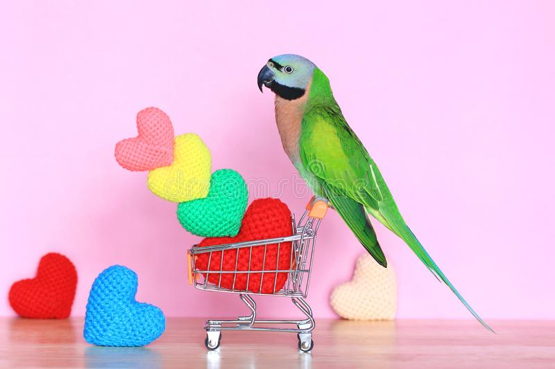 Parrot on model miniature shopping cart and colorful of handmade crochet heart for valentines day stock photography