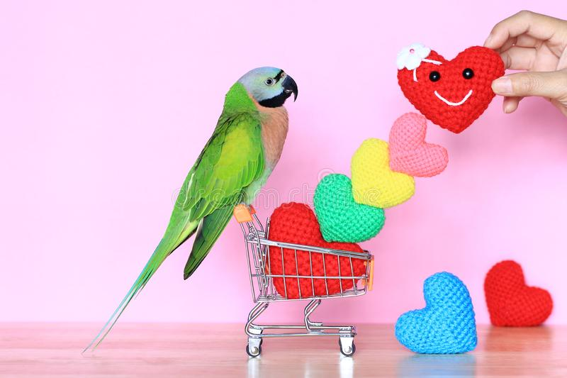 Parrot on model miniature shopping cart and colorful of handmade crochet heart for valentines day stock photos