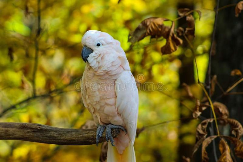 Parrot mountain garden pigeon forge Tennessee royalty free stock images