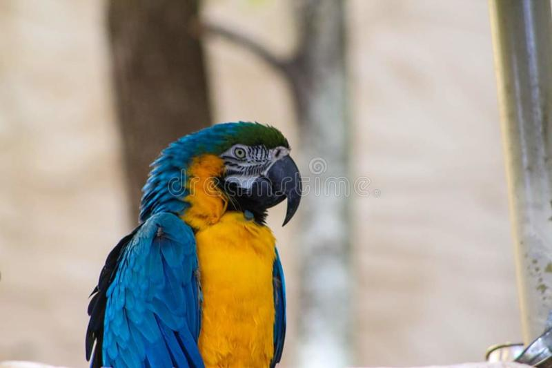 Parrot mountain garden pigeon forge Tennessee stock photo