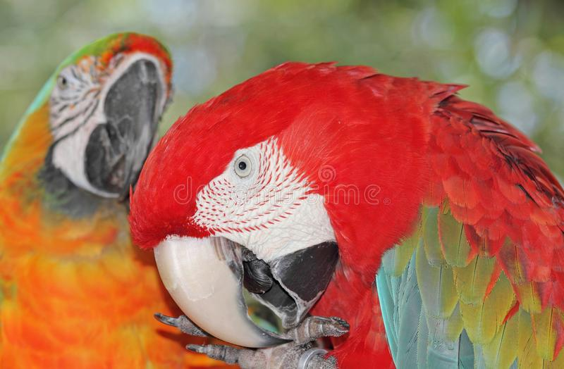Download Parrot in nature stock image. Image of purity, summer - 25949215