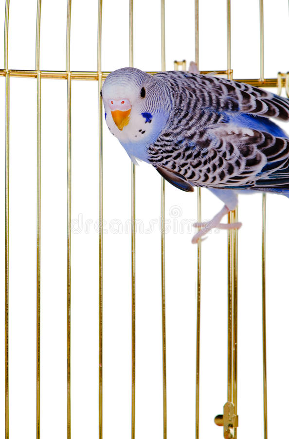 Free Parrot On A Lattice Cage Royalty Free Stock Photography - 18098897