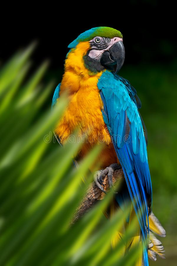Free Parrot Portrait In Jungle Royalty Free Stock Photos - 152655098