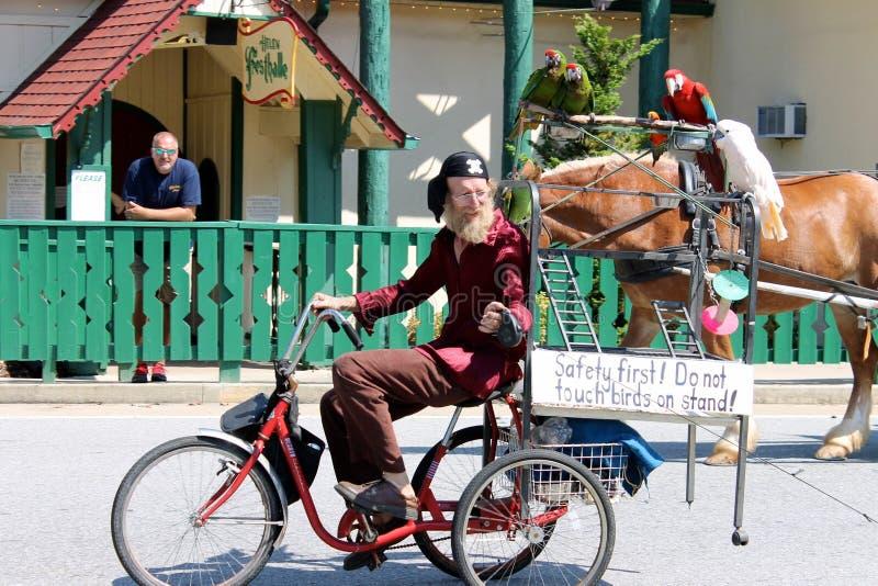 A parrot riding a horse in a parade stock photos
