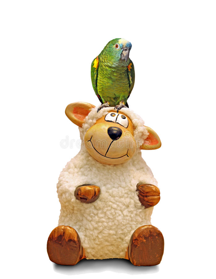 Parrot on sheep head royalty free stock photo