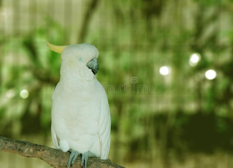 Parrot sightings, selective focus. Wildlife, outdoor, zoo, forest stock photos