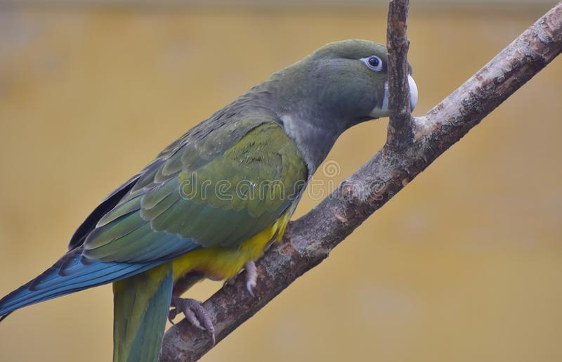 Download Parrot sitting on a branch stock image. Image of background - 103090199