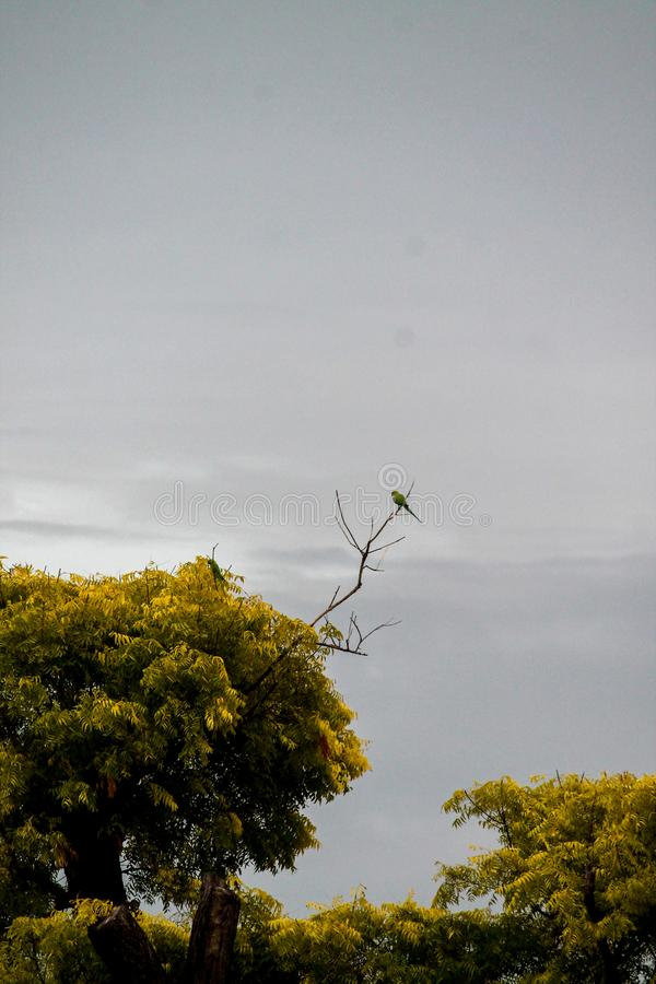 Parrot sitting on a Branch stock images