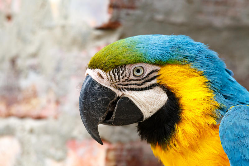 Parrot sneaky look. Parrot bending his head, looking sneaky at you royalty free stock images
