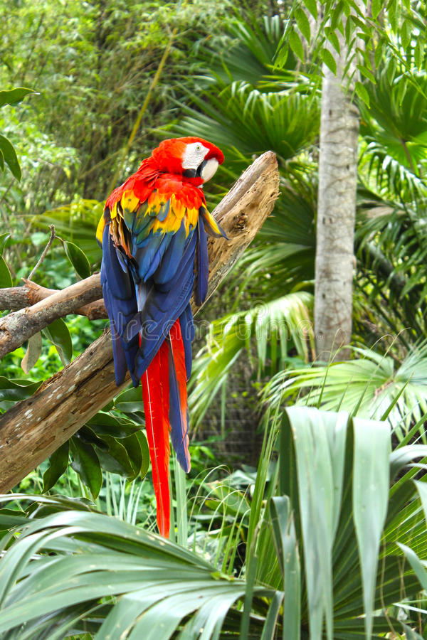 Download Parrot in Tropical Setting stock photo. Image of macaw - 26447822