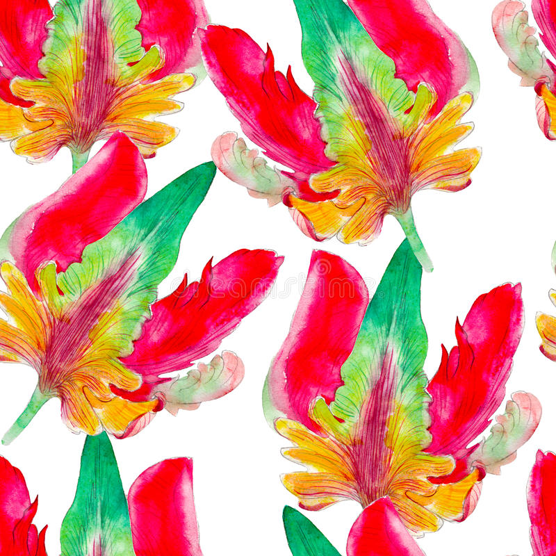 Parrot tulip flower watercolor seamless pattern. Bright tropical flowers isolated on white background. Parrot tulip flower watercolor seamless pattern. Bright stock illustration