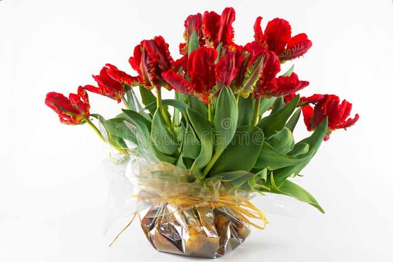 Download Parrot Tulips stock photo. Image of season, white, flower - 19321656