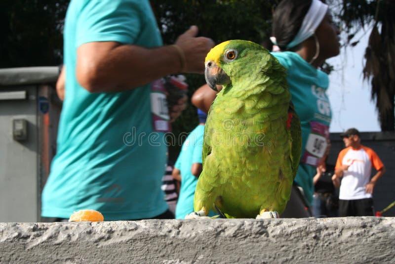 Parrot, Vertebrate, Bird, Macaw stock photography