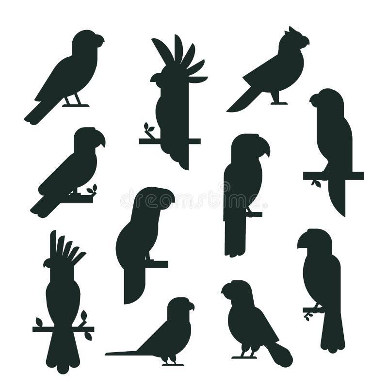 Parrots образования длиннохвостых попугаев животной природы силуэта птиц иллюстрация вектора любимчика черного тропического красо бесплатная иллюстрация