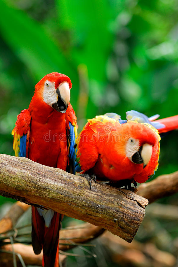 Free Parrots Stock Image - 26943361
