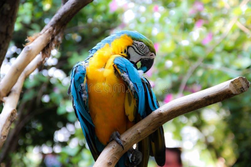 Parrots core. Beautiful parrot's core in the garden stock photo