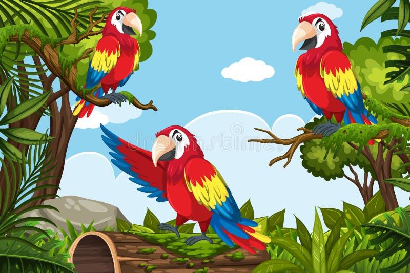 Parrots in jungle scene. Illustration stock illustration