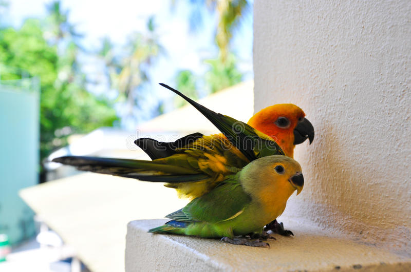 Parrots at Maldives 5 stock images