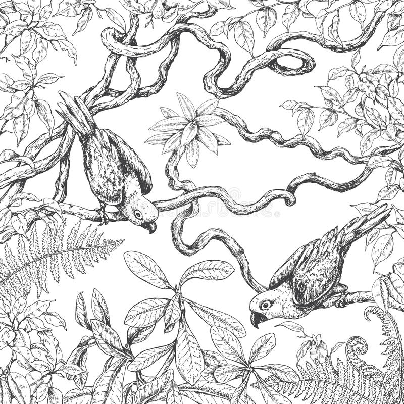 Parrots Sitting on Branches stock illustration