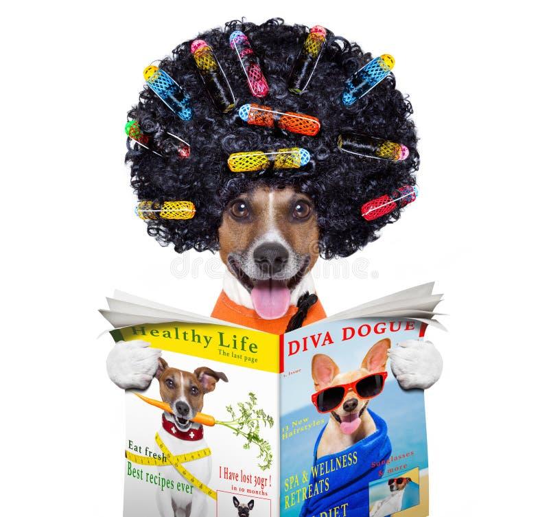 Parrucchiere  cane con i bigodini immagine stock libera da diritti