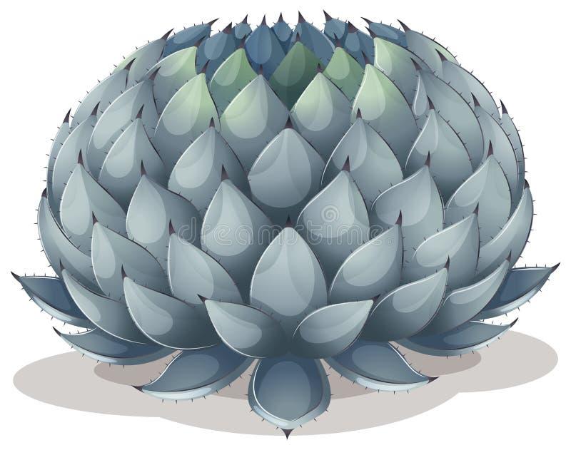 Parryi da agave ilustração do vetor