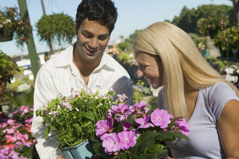 Parshopping för blommor i växtbarnkammare royaltyfri bild