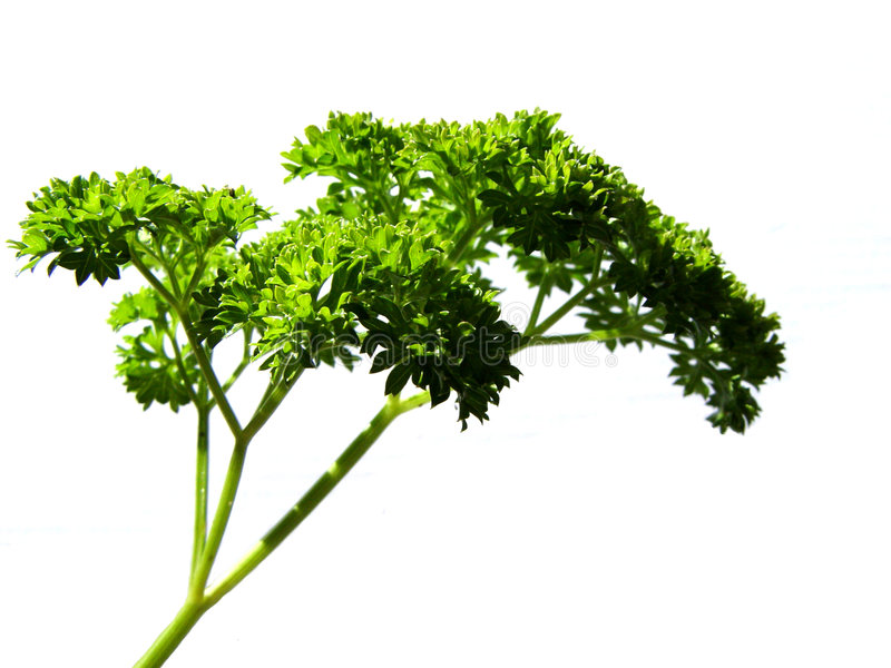 Download Parsley Royalty Free Stock Photo - Image: 10275