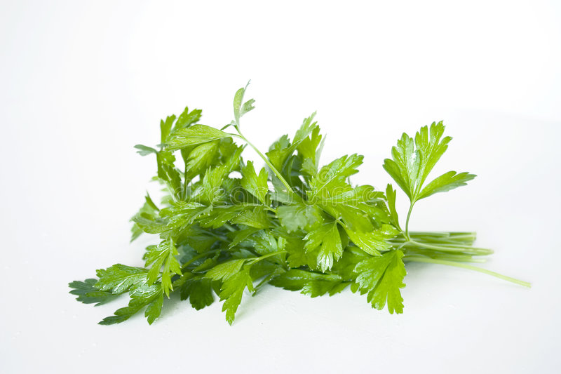 Parsley. Green tops of parsley on white background stock image