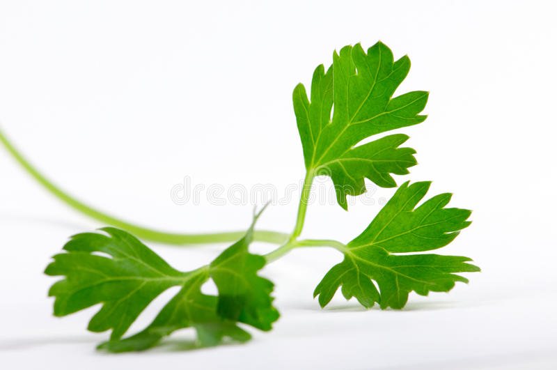 Download Parsley stock photo. Image of dietetic, green, leaves - 14743748