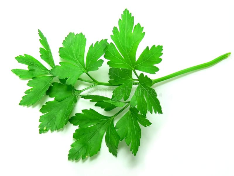 Download Parsley stock photo. Image of ingredient, leaf, parsley - 16942094