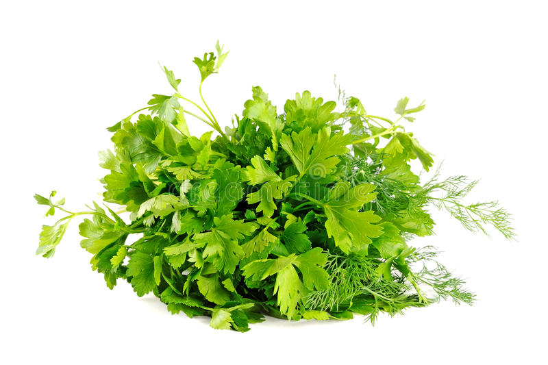 Download Parsley stock image. Image of pile, vivid, plant, agriculture - 24861981
