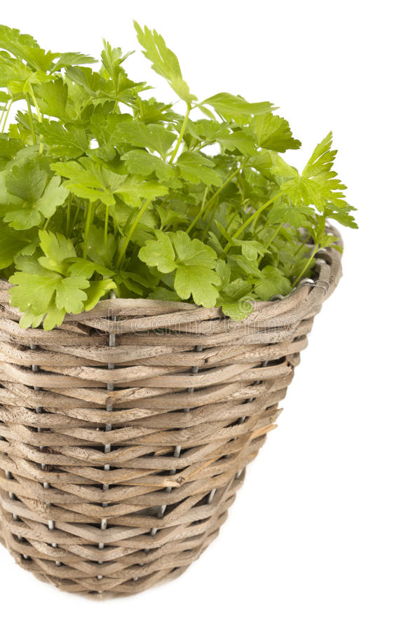 Download Parsley Stock Photography - Image: 26303242