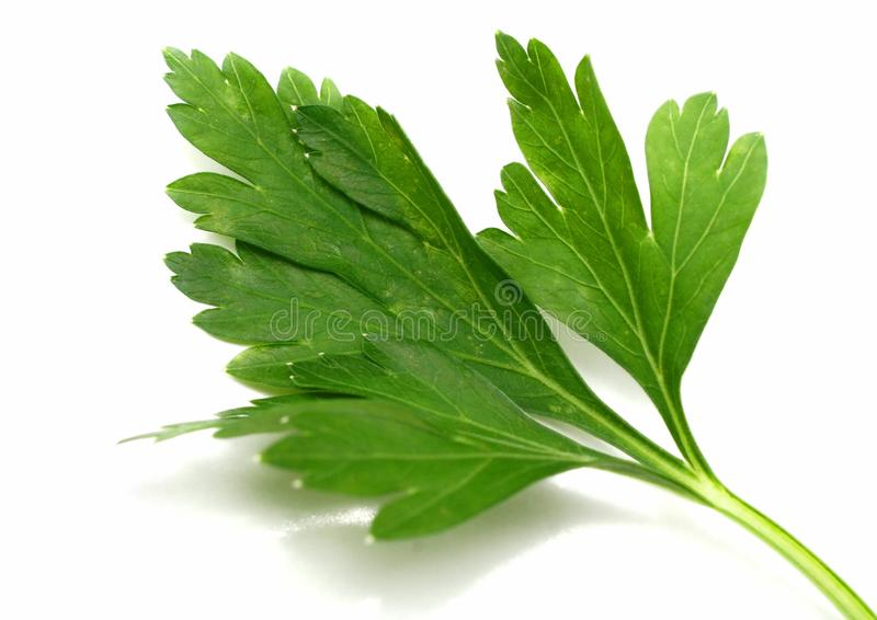 Parsley. A green leaf of parsley macro isolated white royalty free stock photos
