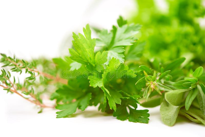 Parsley, Celery, Sage, Thyme, Lettuce leaf, fresh leaves isolated on white background stock photo