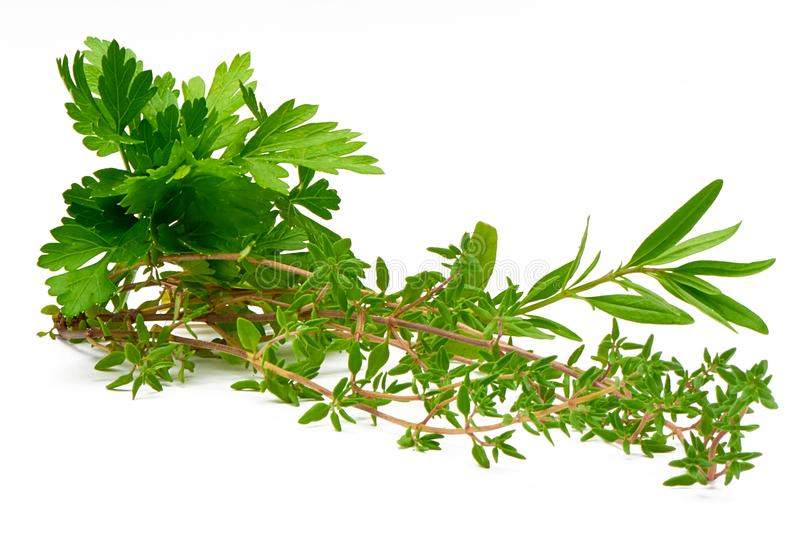 Parsley, Celery, Sage, Thyme, Rosemary, fresh herbs isolated on white background stock photo
