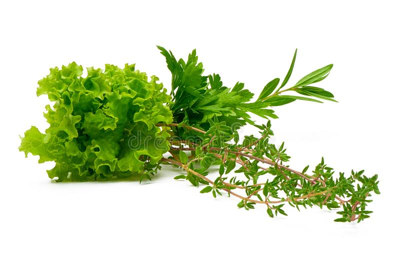 Parsley, Celery, Sage, Thyme, Rosemary, Lettuce, fresh spices isolated on white background royalty free stock photography