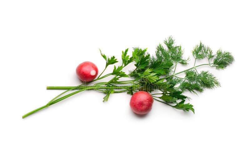 Parsley, dill and radish stock photos