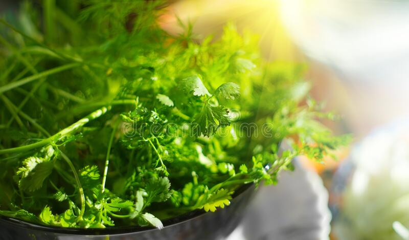 Parsley. Fresh organic parsley leaves in metal colander on a table. Diet, dieting concept. Vegan food, healthy eating royalty free stock images