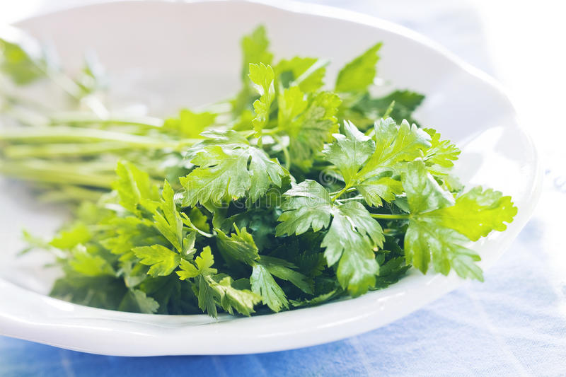 Parsley. Fresh parsley on white plate stock image