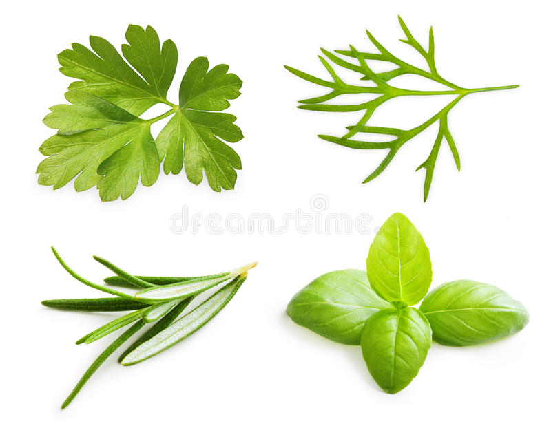 Parsley herb, basil leaves, dill, rosemary spice. Isolated on white background stock image