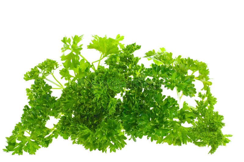 Parsley, isolated. Green parsley, isolated on white royalty free stock photos