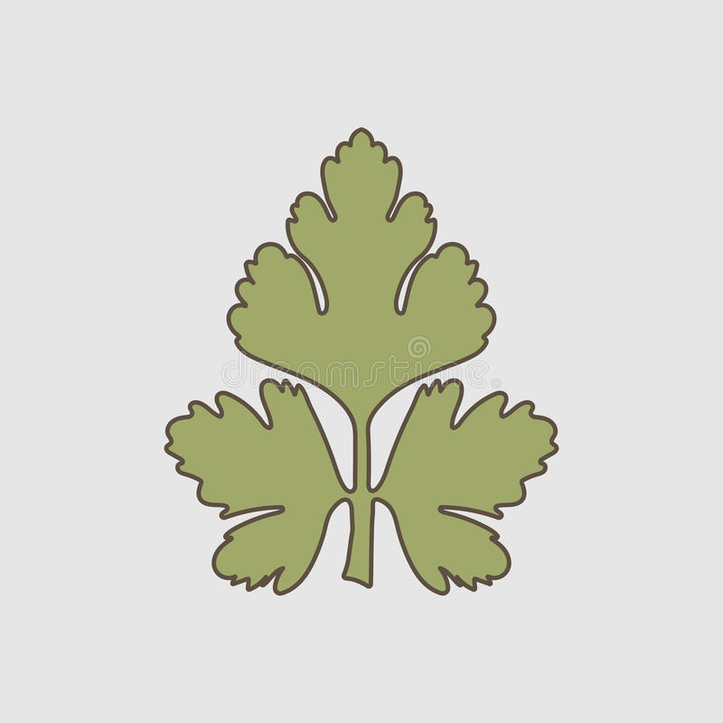 Parsley leaf vector. Parsley, leaf, illustration, vector, isolated, food, herb, logo, natural, plant, spice, white, design, symbol, icon, fresh, object, organic stock illustration