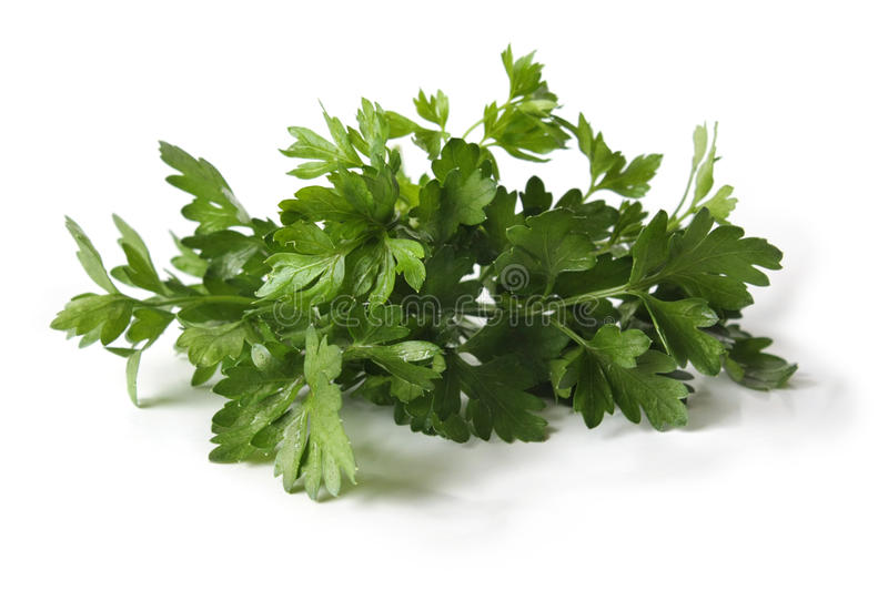 Parsley leaves on a white background stock photography